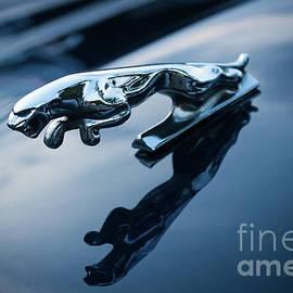 Jaguar Car Mascot