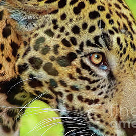 Jaguar Up Very Close by DBHayes