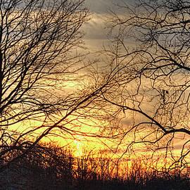 William Sturgell - January Sunset through the Trees