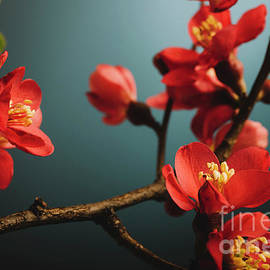 Jelena Jovanovic - Japanese flower