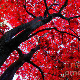 Joy McAdams - Japanese Maple