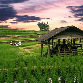 Matt De Moraes - Jatiluwih Rice Fields