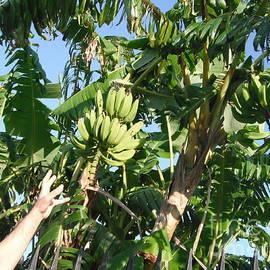 JAX bananas