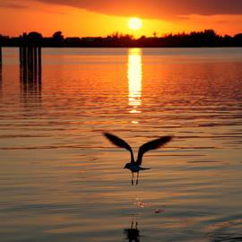 Jonathan Livingston Seagull by Karen Wiles