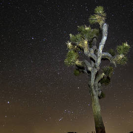 Janet Ballard - Joshua Tree Night Light