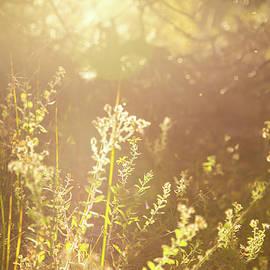 Kunal Mehra - Joys of an autumn sunset