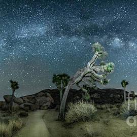 JTNP Under the Milky Way by Lisa Manifold