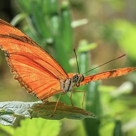 Tim Abeln - Julia Butterfly