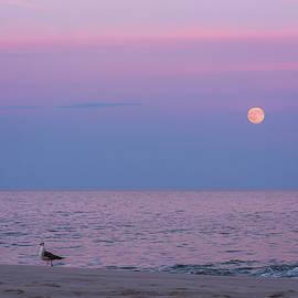 Terry DeLuco - July Full Moon 2016 Lavallette NJ