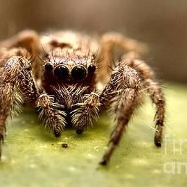 Jaimin Panchal - Jumping Spider