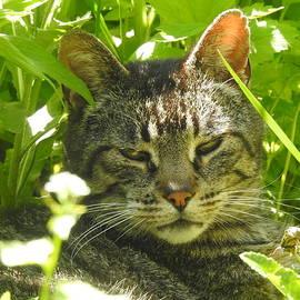 Deborah Weinhart - Jungle Kitty