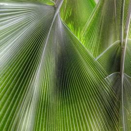 Jungle Palms - Marianna Mills