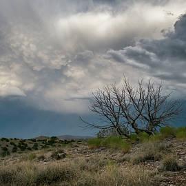 Mary Lee Dereske - Juniper Skeleton and Storm Clouds
