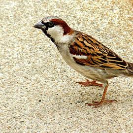 Alex Galkin - Just a sparrow