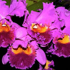 Phyllis Denton - Just Orchids Painterly