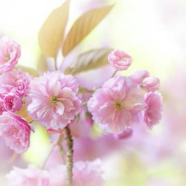 Kanzan Cherry Blossom by Jacky Parker