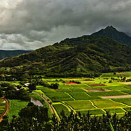 Kauai Taro Fields by Richard Hinds