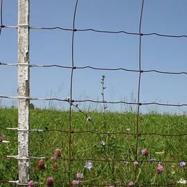 Kentucky Fence by Dylan Punke