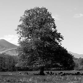 Killarney National Park, County Kerry, Ireland by Aidan Moran