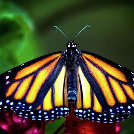 Mark Andrew Thomas - King of the Monarchs