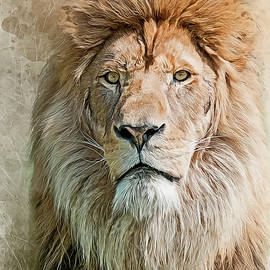 King of The Pride by Brian Tarr