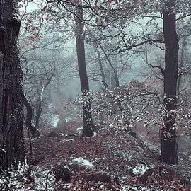 Jenny Rainbow - Kingdom of the Trees