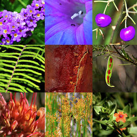 Miroslava Jurcik - Kingdom Plantae