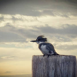 Kingfisher at Sunrise by Marilyn Wilson