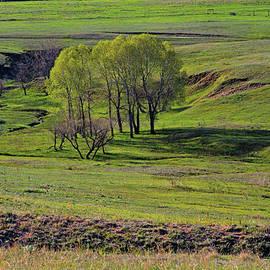 Alana Thrower - Kiowa Creek