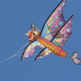 Kite 1 by Maciek Froncisz