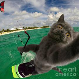 Kite Surfing Cat Selfie