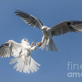 Kite Transfer by Lisa Manifold