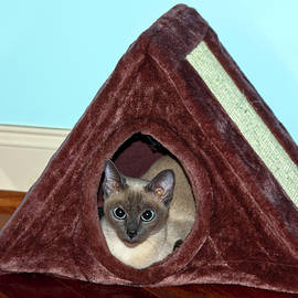 Kitten in Her House by Sally Weigand
