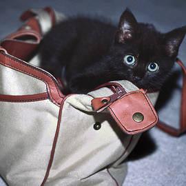 Kitten In Pocketbook by Sally Weigand