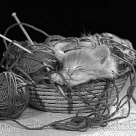 Kitten Sleeping In Basket Of Yarn by H Armstrong Roberts ClassicStock