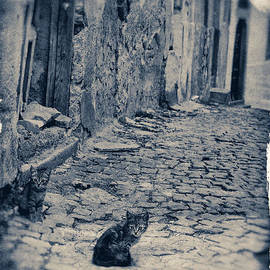 Kittens on Cobbled Street #4 by A Cappellari