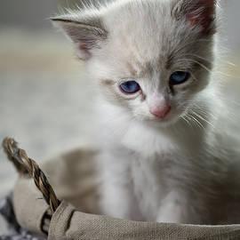 Kitty Cat by Alexander Fedin