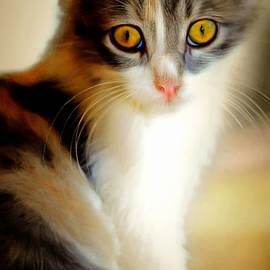 Wingsdomain Art and Photography - Kitty Cat Painterly 20170922 v1