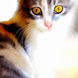 Wingsdomain Art and Photography - Kitty Cat Painterly 20170922 v2