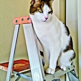 Kitty On The Ladder By C J Anderson