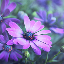 The Painted Daisy by Jessica Jenney