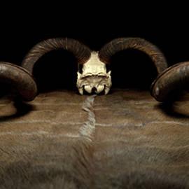 Kudu Pano by David Andersen