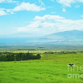 Kula Upcountry Maui Hawaii by Sharon Mau