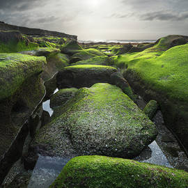 La Jolla Mossy Rock Sunset by William Dunigan