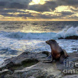 Eddie Yerkish - La Jolla Sea Lion