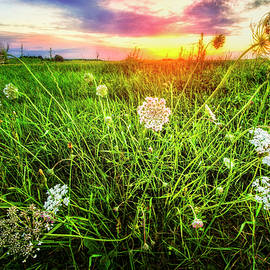 Lace at Sunset by Debra and Dave Vanderlaan