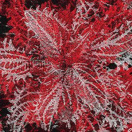 Lacy Leaves Abstract by Claudia O'Brien