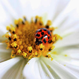 Darren Fisher - Lady Bug and her Cosmo