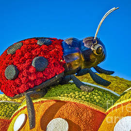 Lady Bug catching a Ride by David Zanzinger