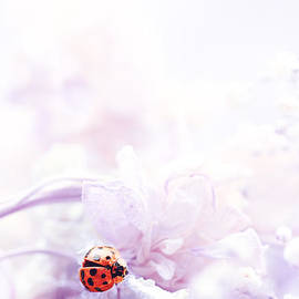 Stephanie Frey - Lady Bug